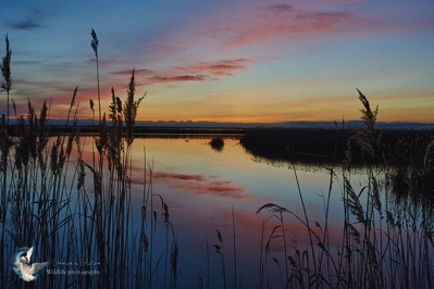 Sunset over the ponds - Camargue