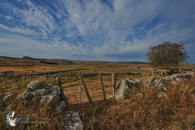 Landscape of Aubrac