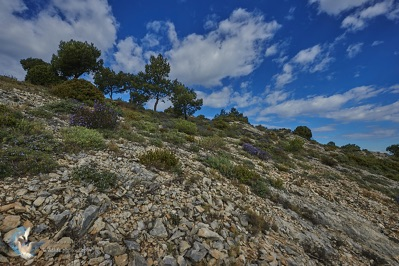 The Alpilles - Provence